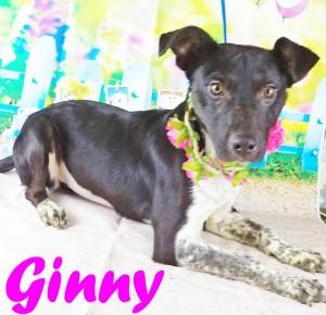 ginny2