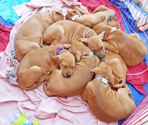 matildaspuppies
