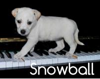 snowball11
